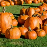 wpid-fall-active-4_pumpkin.jpg